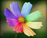 День рождения «Восьмицветика»